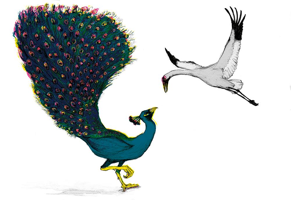 jackie-taylor-peacock-crane.jpg