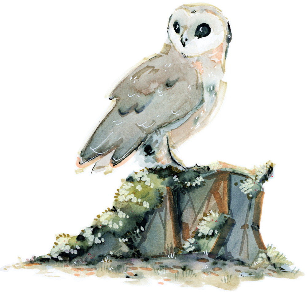 owl - scene.png