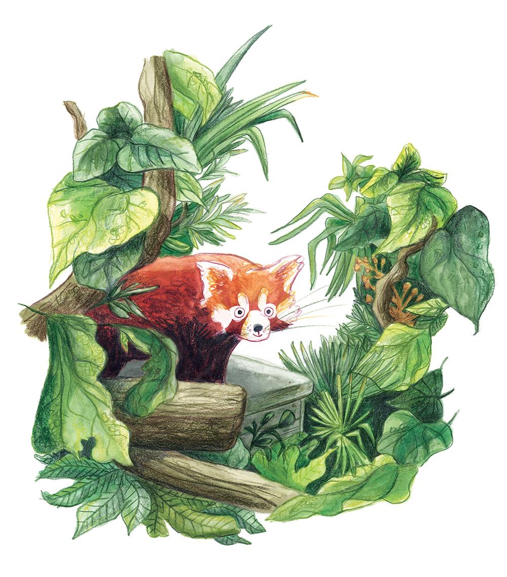 red panda low res rgb.jpg