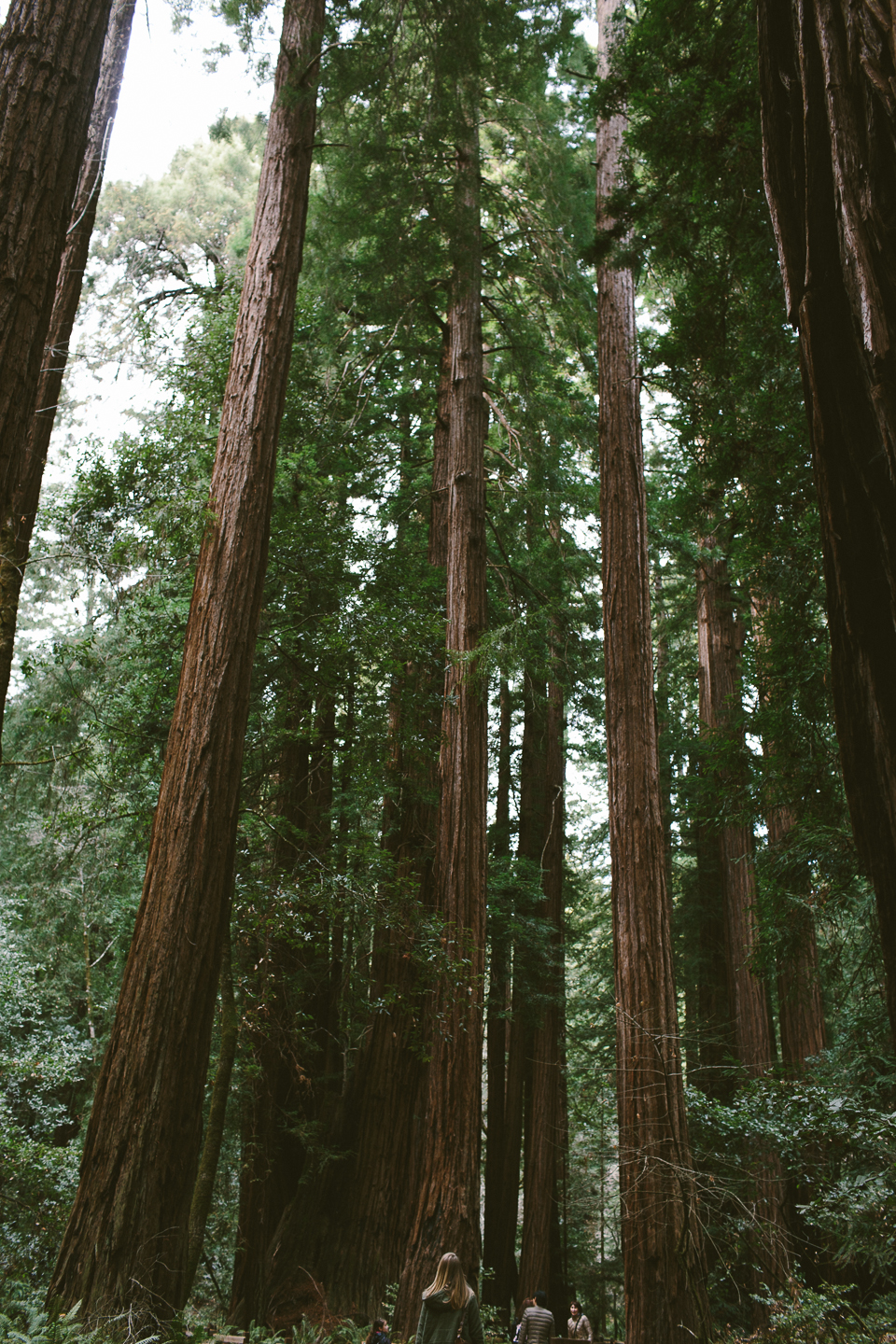 Muir Woods, Mill Valley, CA | Someplace Wild | www.someplacewild.com