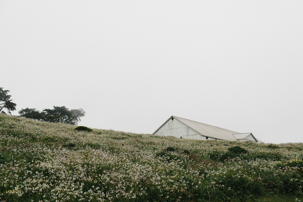 Point Reyes Adventure Engagement Photographer-53.jpg