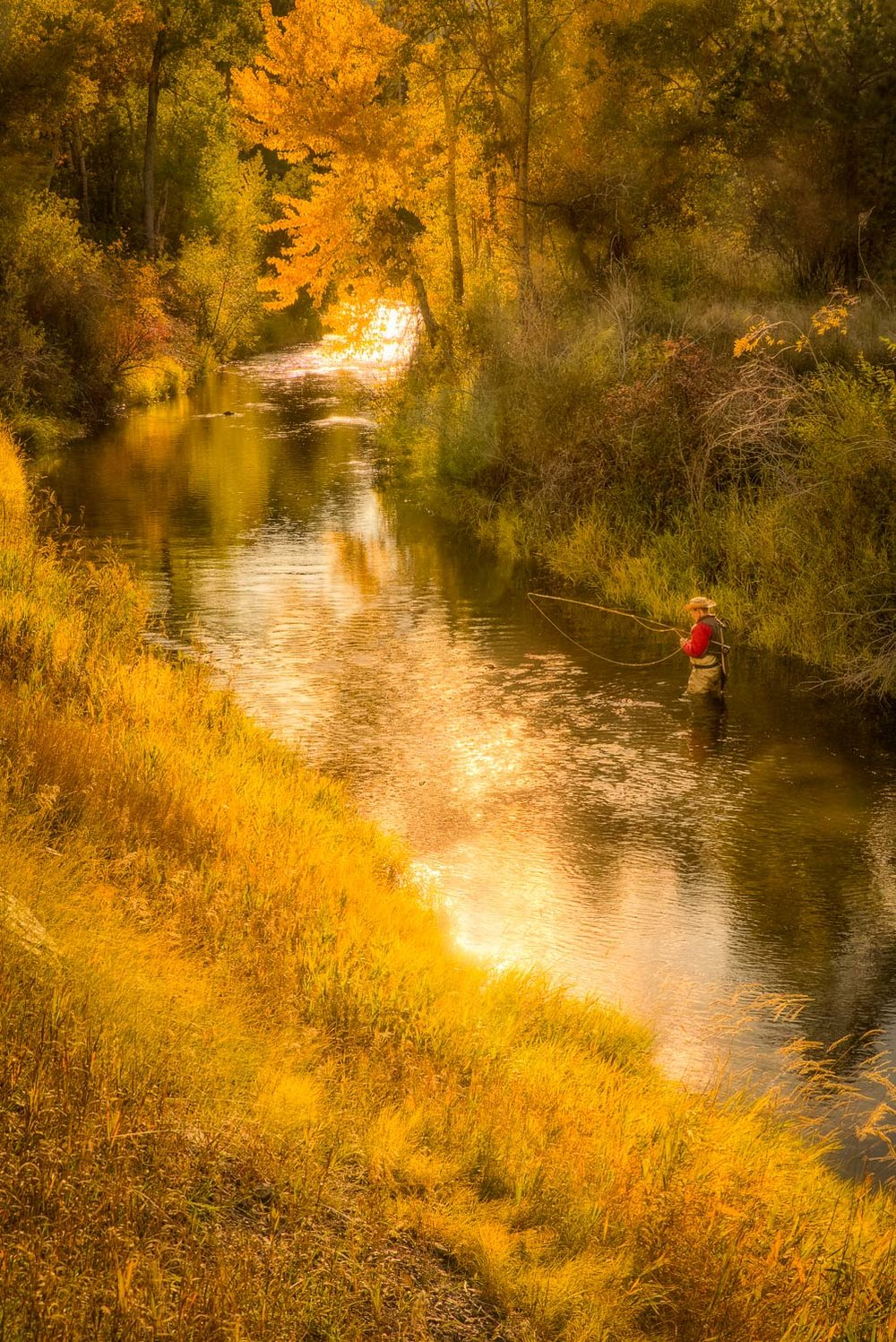 Golden Evening Angler-Montana