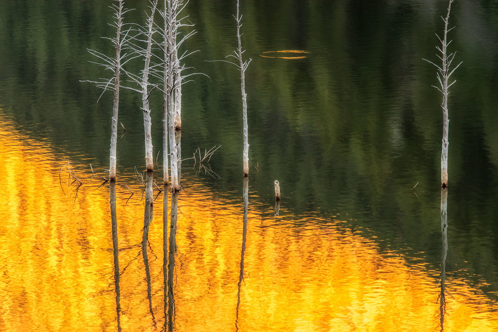 Reflection of Trees in Quake Lake