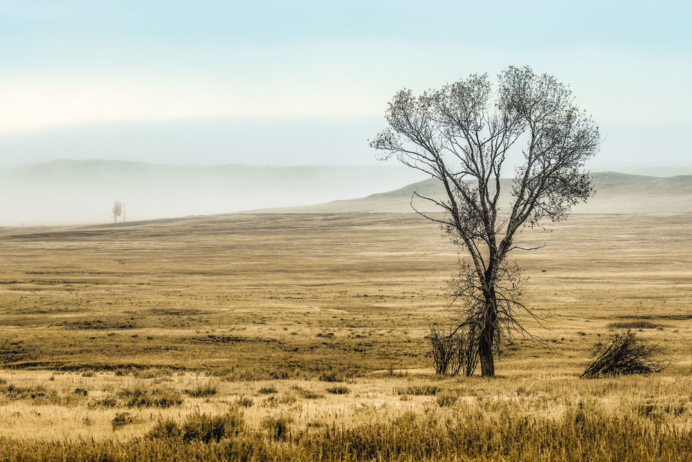 Lonely Tree in Eastern Montana