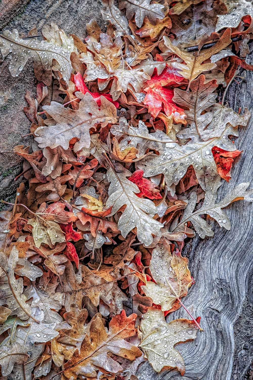 Leaves and Bark, Zion National Park, Utah
