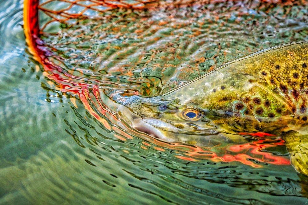 Rowan Nyman Fishing Angler Vistas-7.jpg