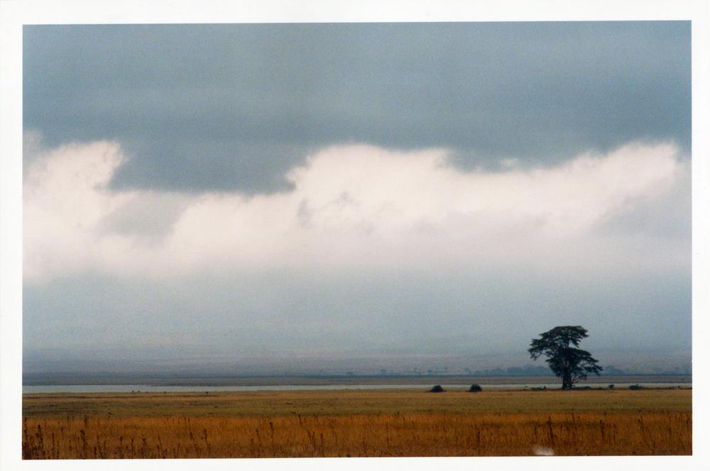 Africa tree tanz140.jpg