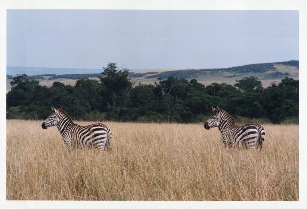 Africa Zibra Kenya B.jpg