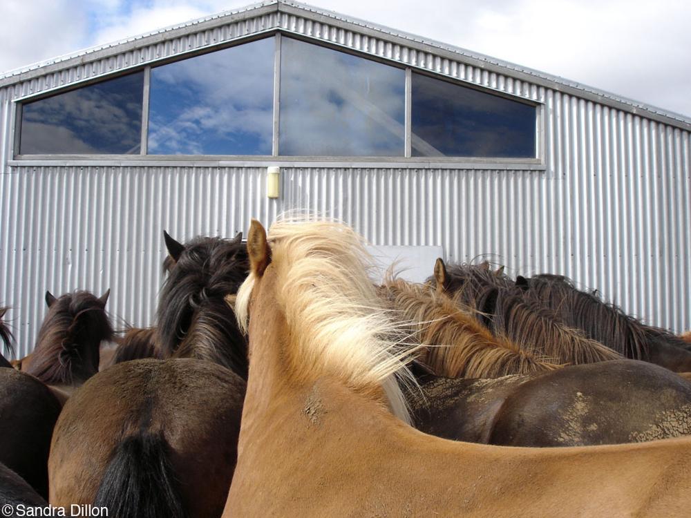 Horse Church