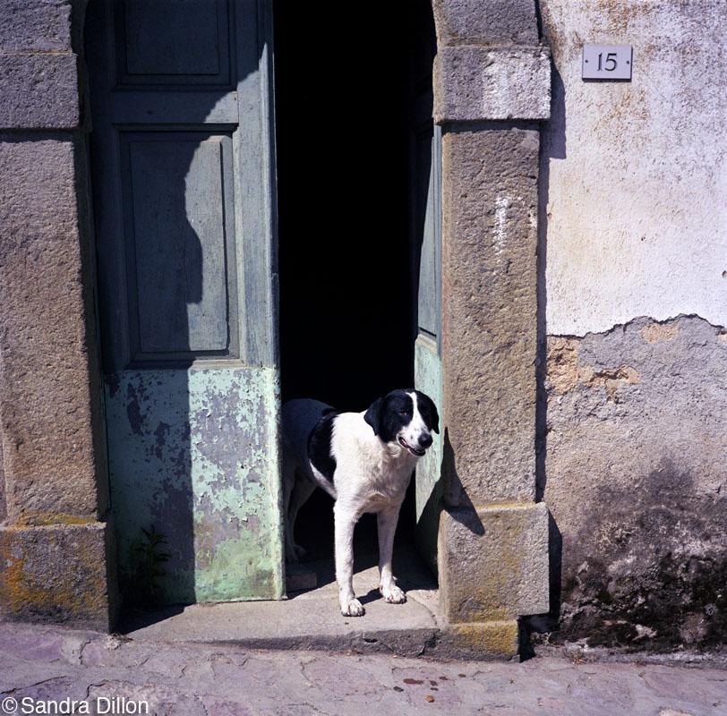 Doggie No. 15