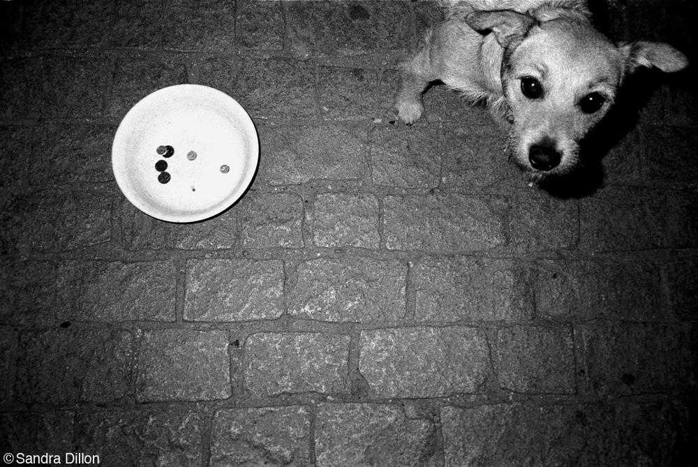 Beggar Dog, Prague, Czech Republic