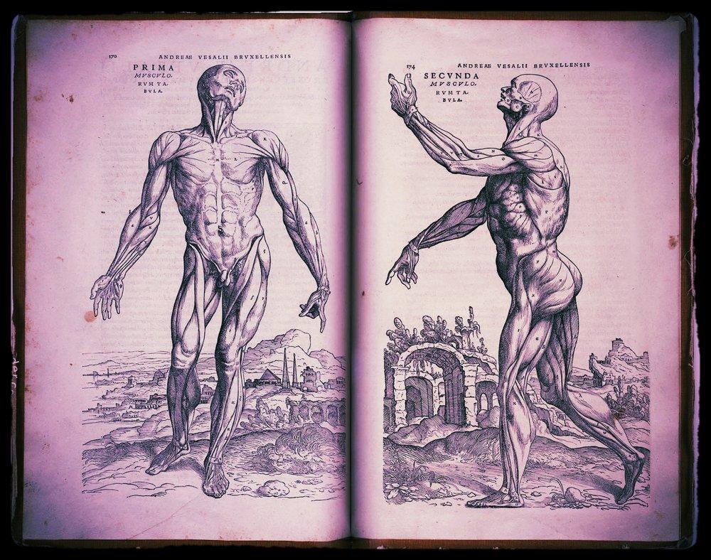 Andreas-Vesalius-Humani-Corporis-Fabrica-facsimile-edition-05.jpg