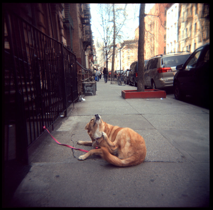 Dog, East Village, New York City