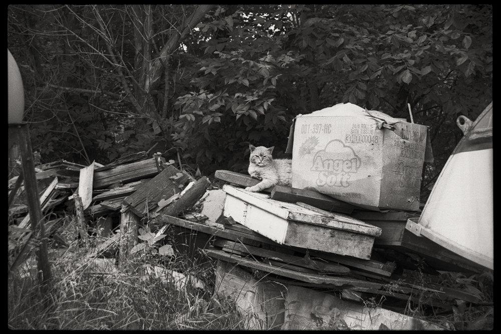 Trash Cat | Trash Pile | Wheeling, West Virginia