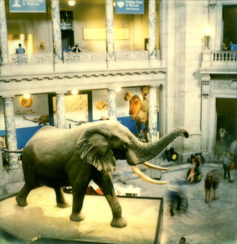 """Meet me at the Elephant."" Natural History Museum, Washington DC"