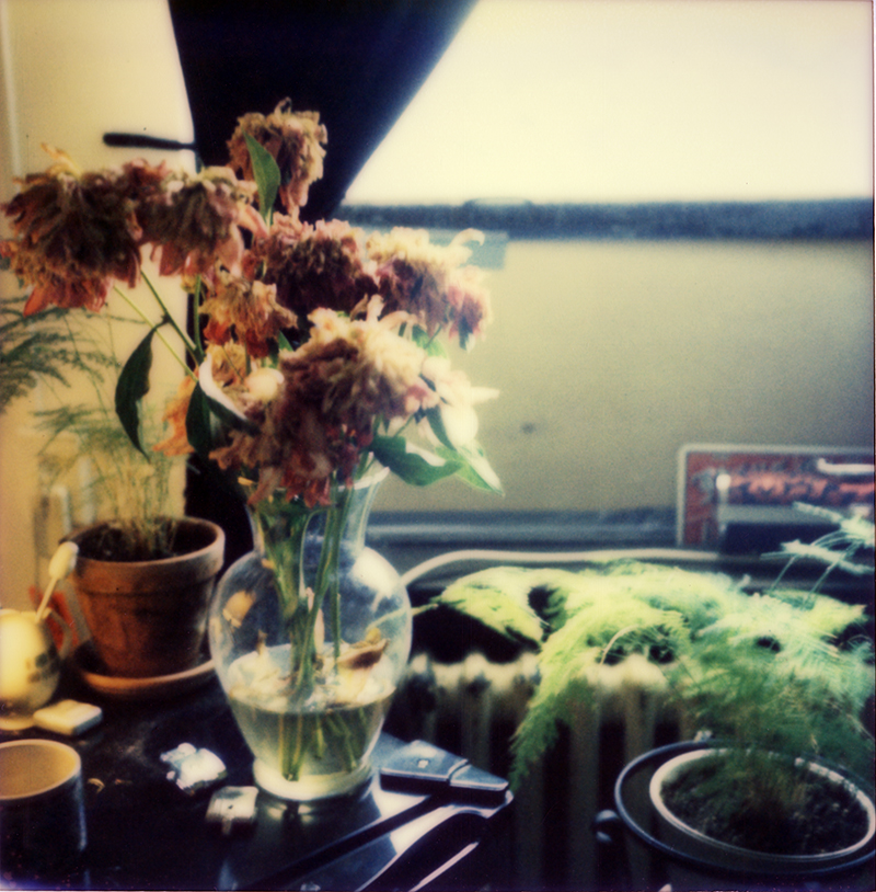Green Plants & Dead Flowers | Hudson NY