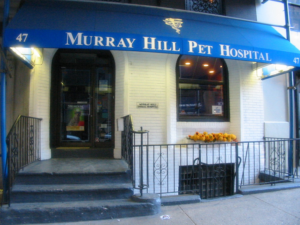 Murray Hill Pet Hospital | 30th Street, New York NY