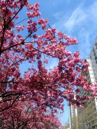 Pink | Bleecker Street