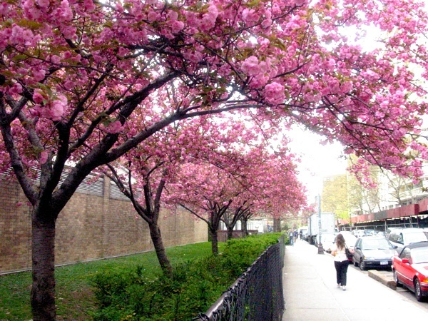 Bleecker Bloom | Bleecker Street