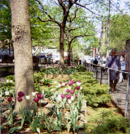 Tulips | Bleecker, New York City