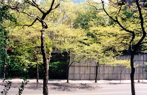 Baby Green | 42nd Street, New York NY