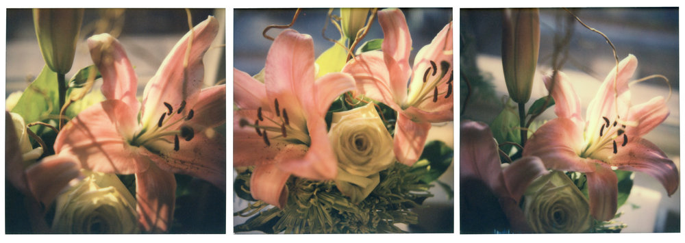 Lily Triptych