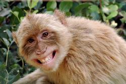 Monkey-Mia-MJK-Australia.jpg