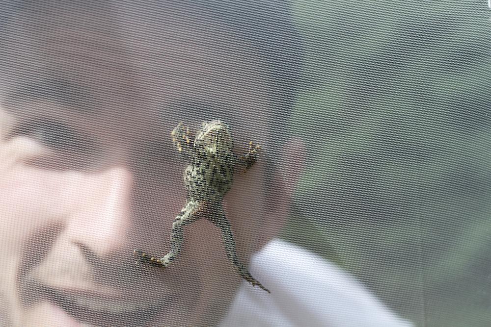 frog tent.jpg