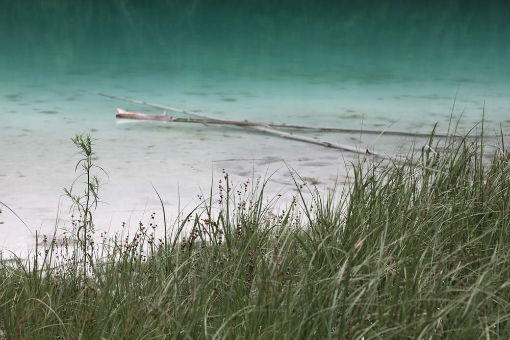 grass lake.jpg