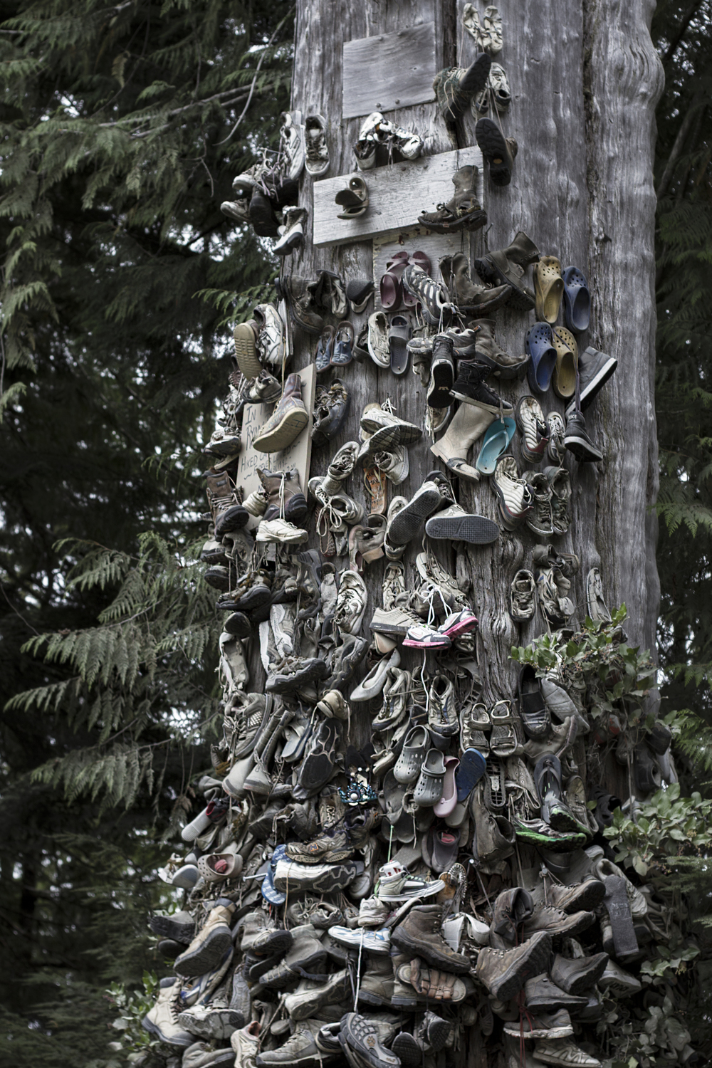 shoe tree San Josef Bay