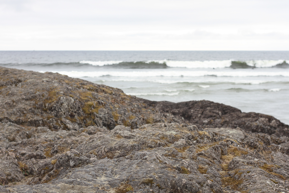 Tofino | PiperWinston