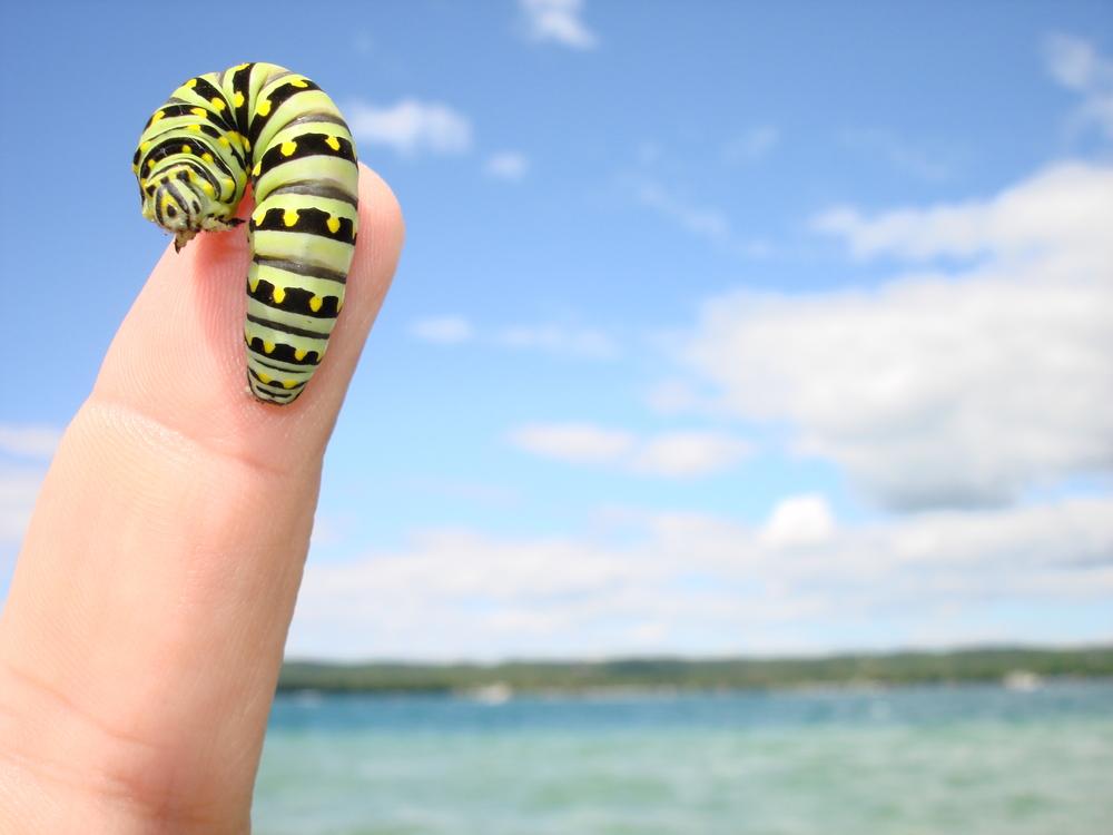 Fingerpillar