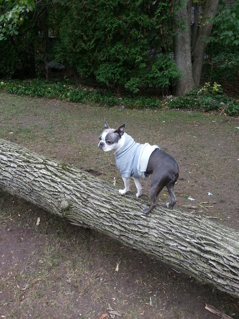 My stick.