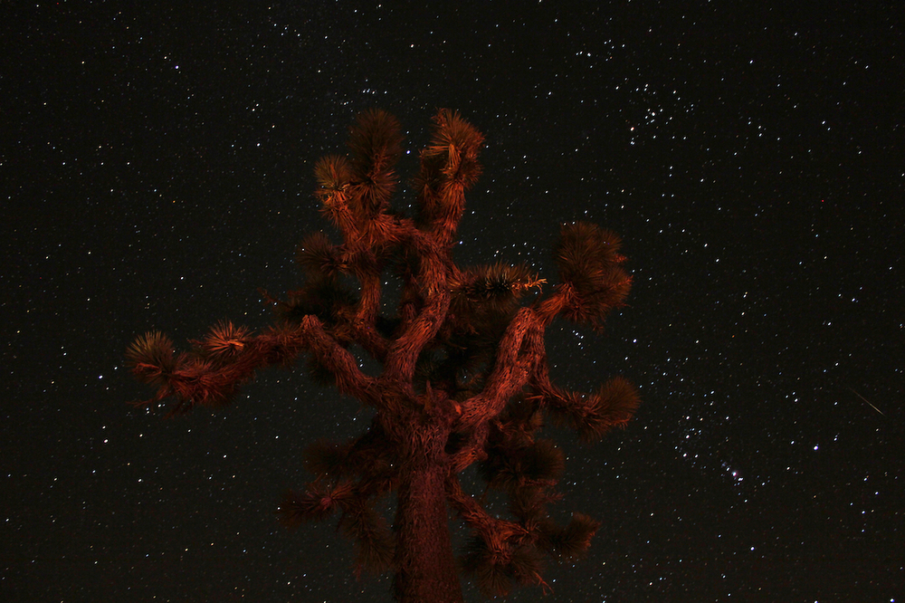 joshuatree_web.jpg