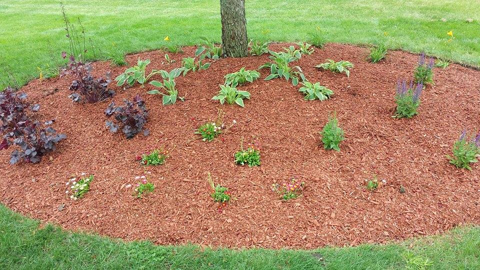 mulch_bed_1