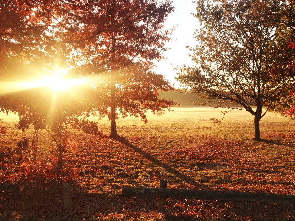 fall canberra.jpg