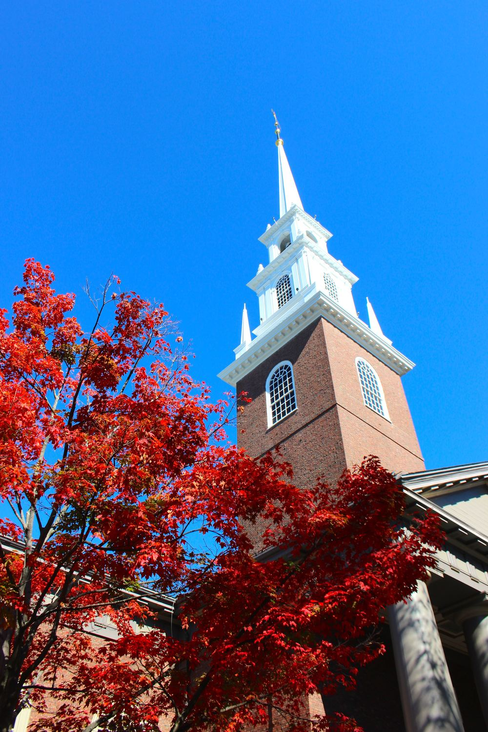 The historic Harvard Quad awash with Autumn colour.