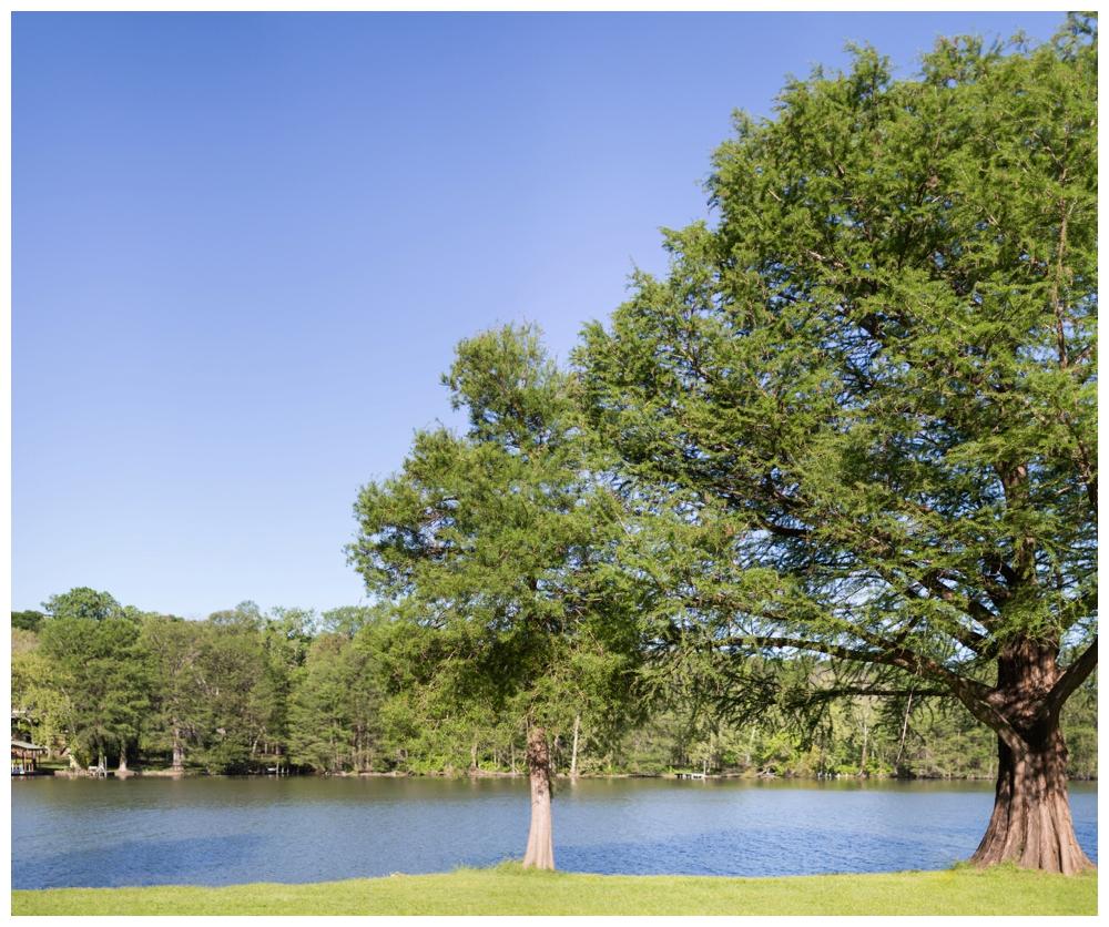 Austin Park Wedding
