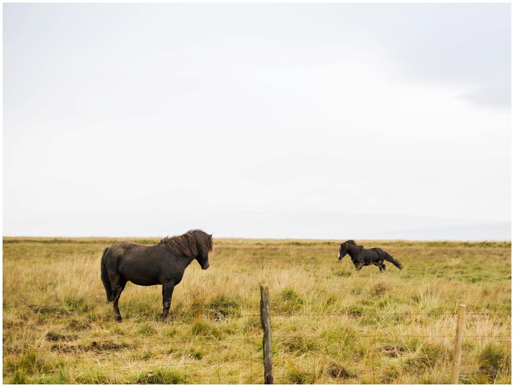 August Iceland Ring Road Trip_0008.jpg
