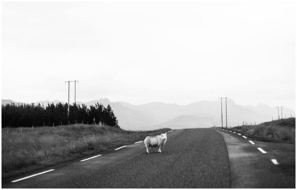 August Iceland Ring Road Trip_0051.jpg