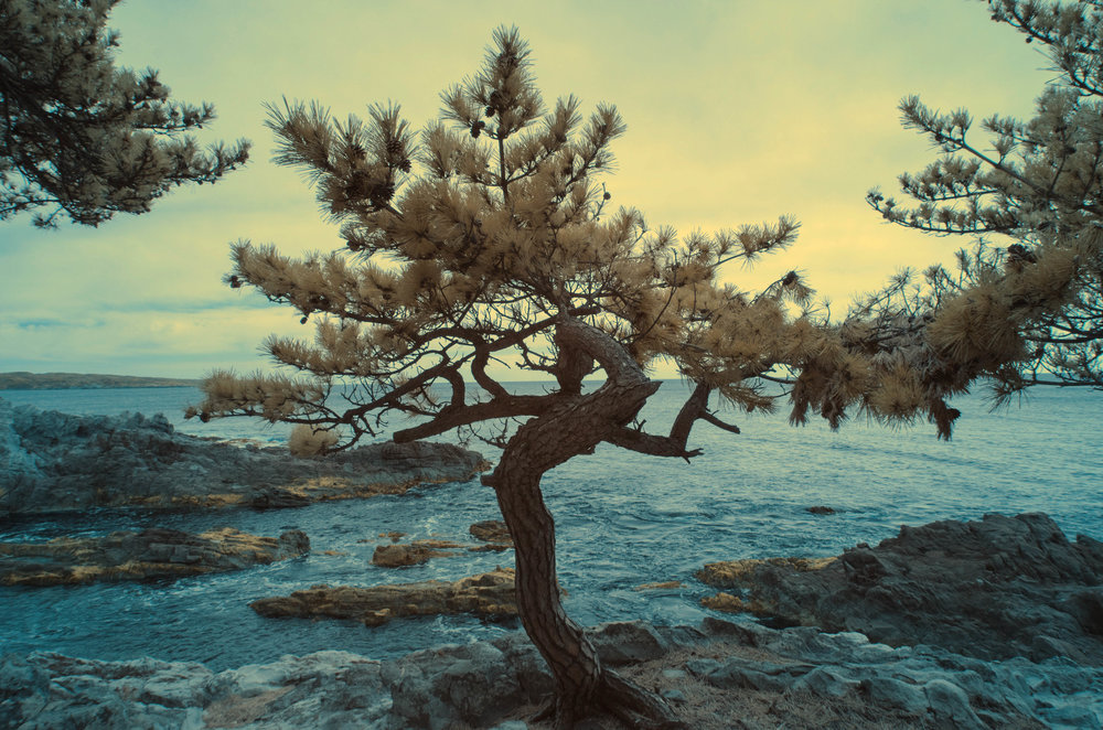 Sea Tree(ed).jpg