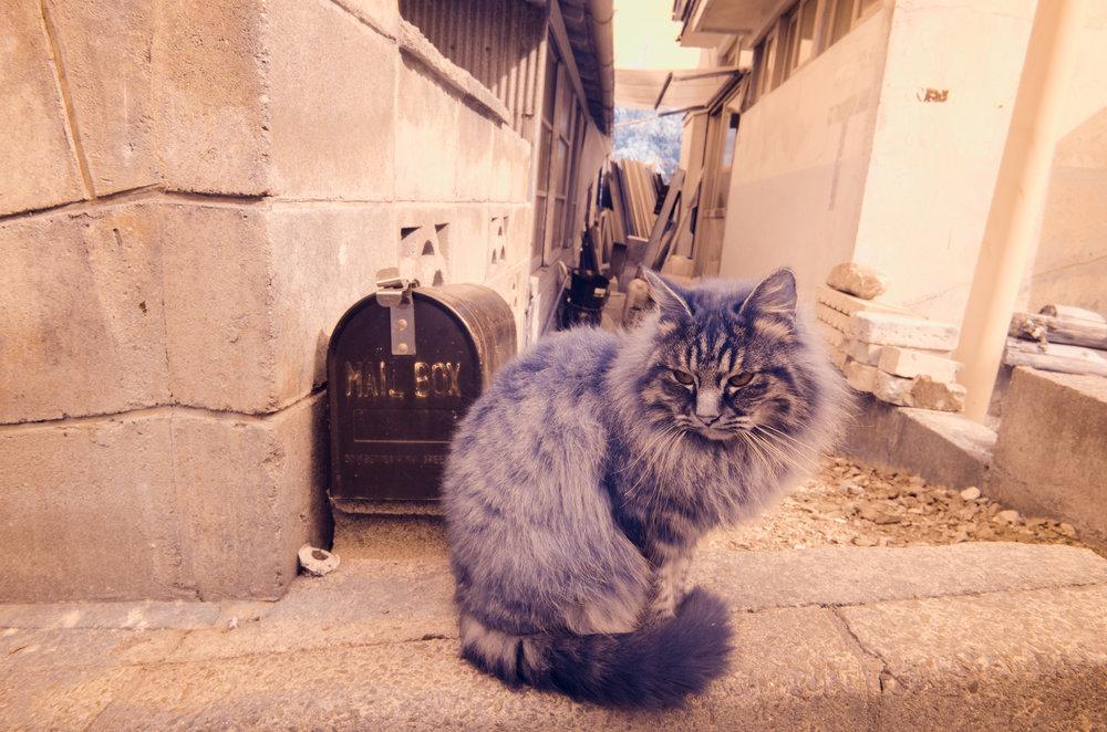 Blue-Cat.jpg