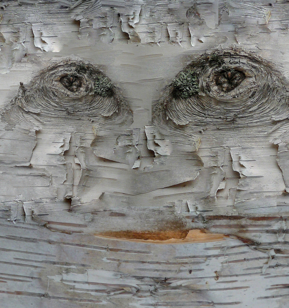 Adirondack face, Q. Cassetti, 2010