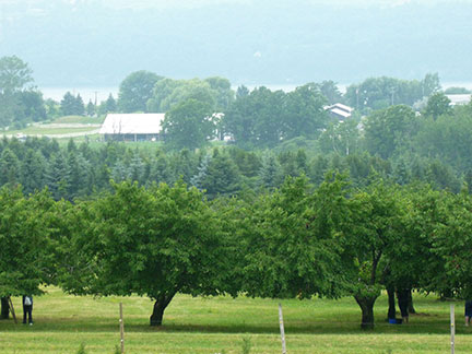 View from Dalrymple Farms, Ball Diamond Road, Hector, NY. 07.01.2013