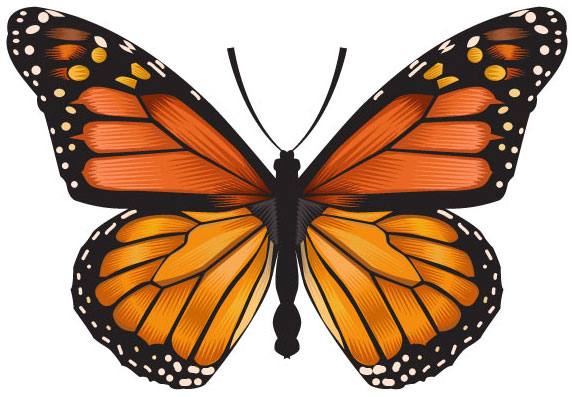 Monarch, Q. Cassetti, 2014, Adobe Illustrator CC.