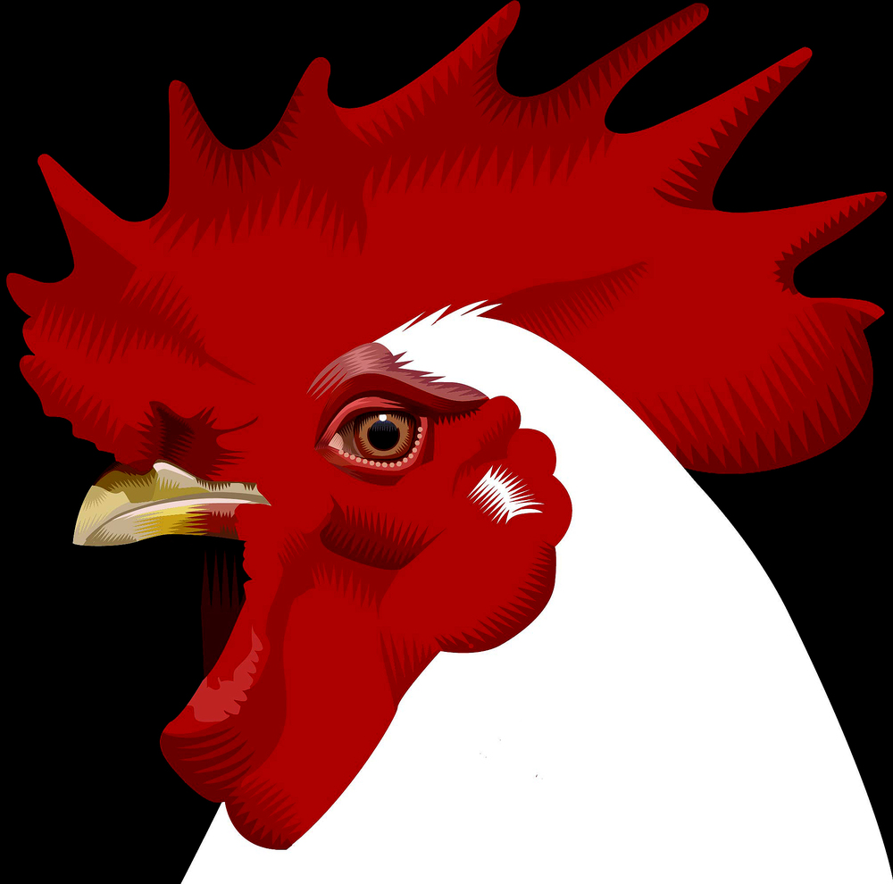 Chicken Q. Cassetti, 2015 Adobe Illustrator 2015