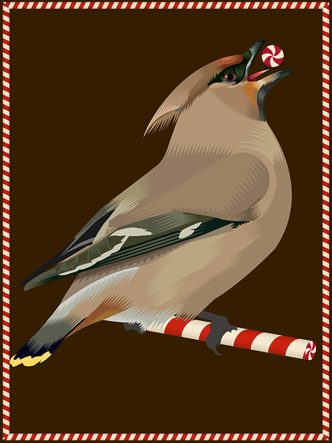 Advent 2015: Day Two: A Peppermint Waxwing for Kitty Cassetti Q. Cassetti, 2015 Adobe Illustrator CC 2015