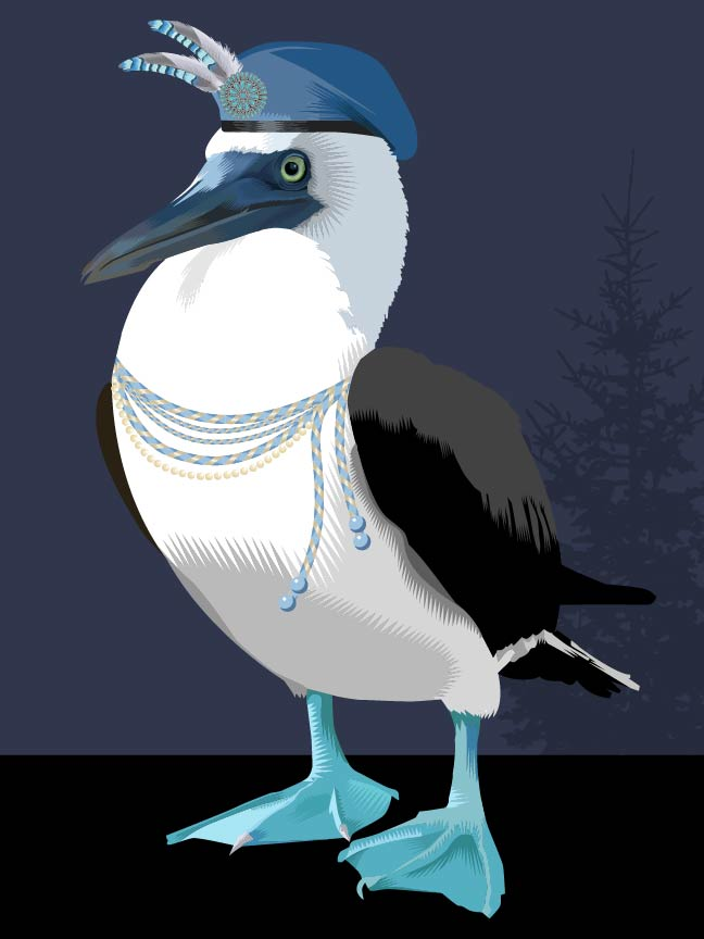 Advent 2015: Day Seventeen Standing Tall (Blue footed Booby) Q. Cassetti, 2015