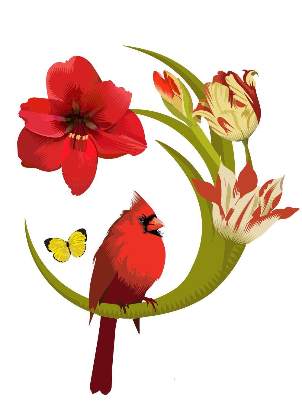 Cardinal2-01.jpg
