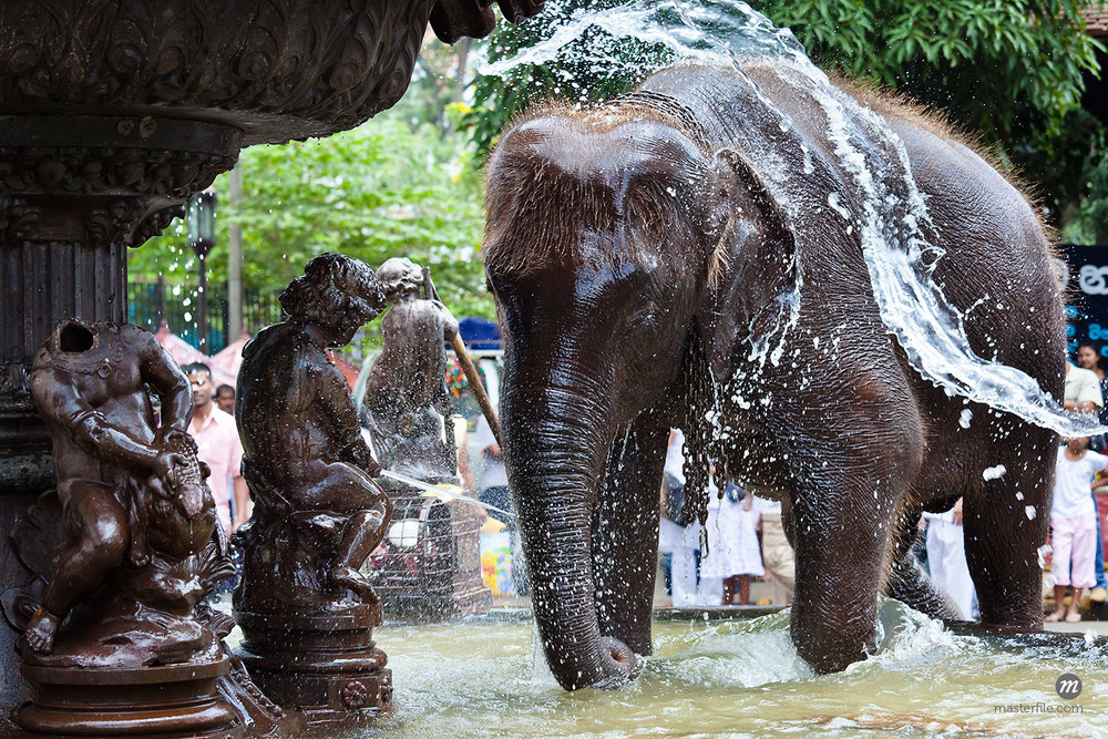 Elephant Being Washed in Public Fountain before Perahera Festival, Kandy, Sri Lanka  ©  R. Ian Lloyd / Masterfile